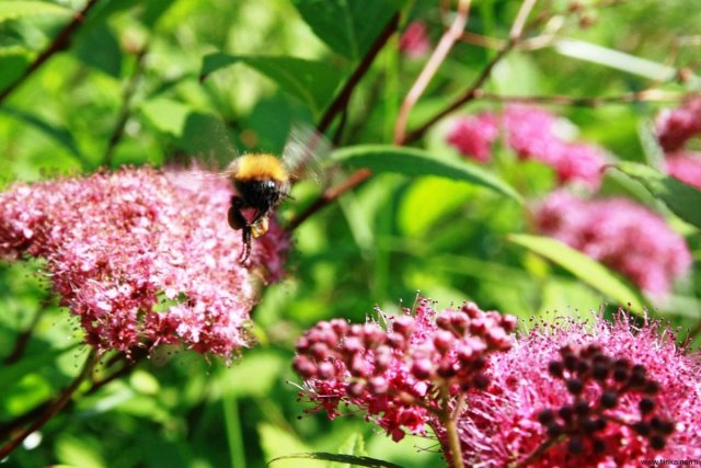 04-07-2013-bee-approach-stage-one