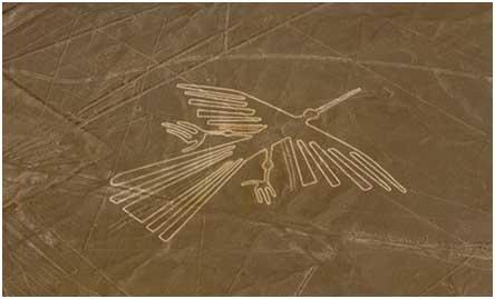 Nazca kolibrie copy