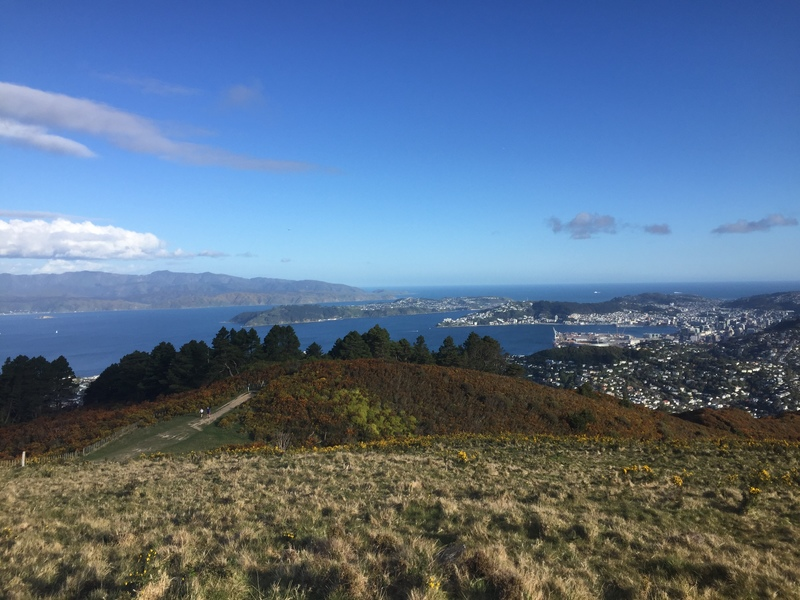 beauitful wellington