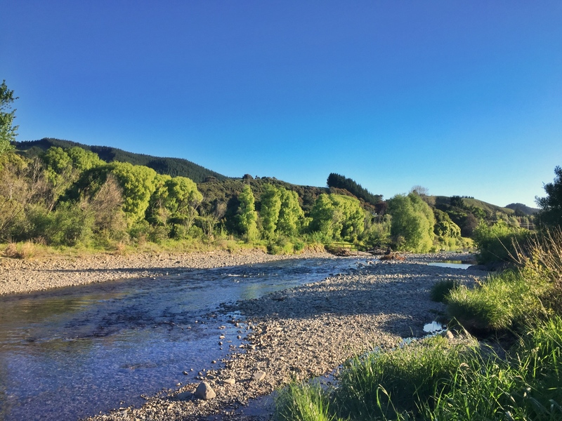 waikanae river walk view