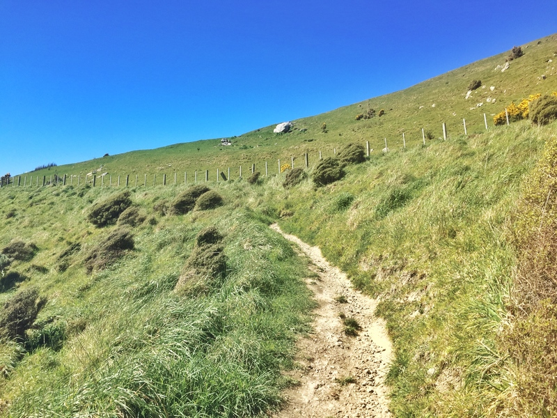 the track of paekakariki escarpment
