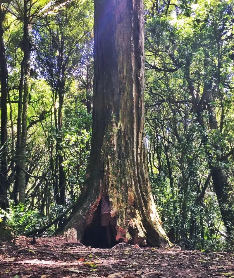 manawatu gorge reserve trees