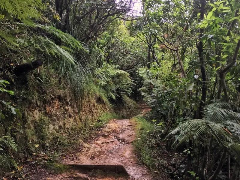 tirohang track bush