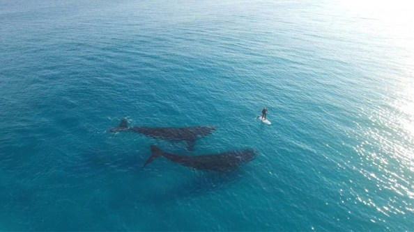 whales with paddle boarder 1024x576 whales with paddle boarder