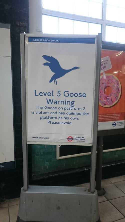 level 5 goose warning level 5 goose warning