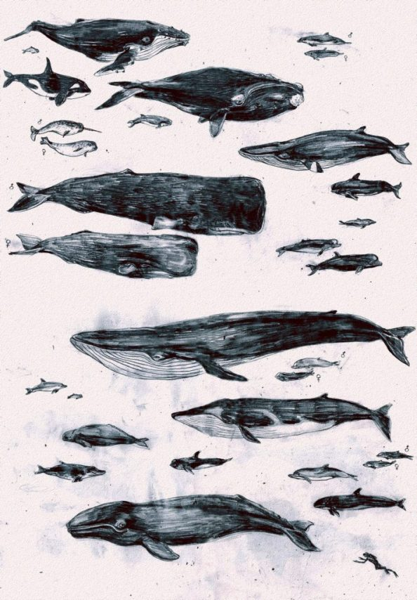 whales of the world 712x1024 whales of the world