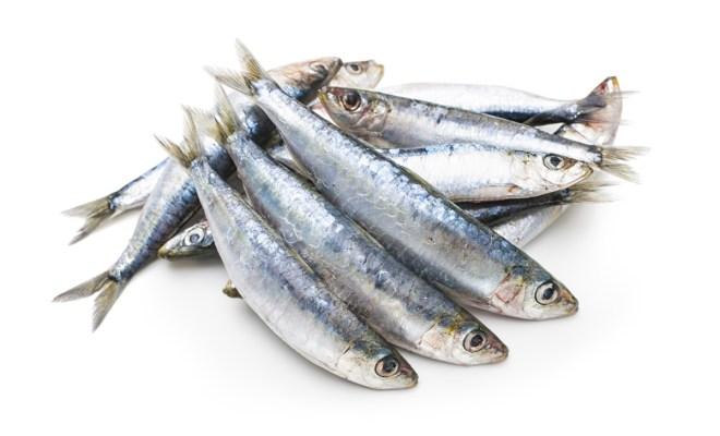 Kandungan Nutrisi Penting Ikan Sarden dan Sejuta Manfaat Lainnya