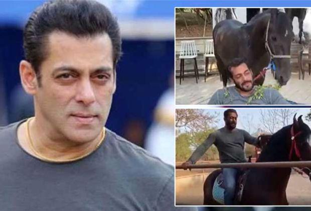 Karantina Mandiri, Salman Khan Isi Waktu dengan Rawat Ternak dan Berkuda