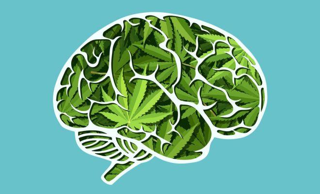 Efek Buruk Ganja yang Digunakan Aktor Dwi Sasono pada Otak