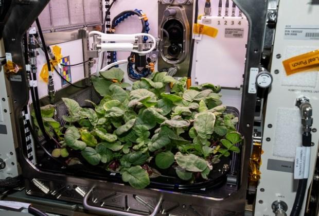 Advanced Plant Habitat