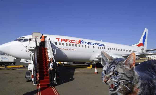 Ganas, Seekor Kucing 'Membajak' Pesawat di Sudan