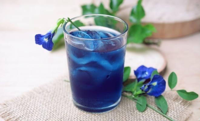 5 Manfaat Luar Biasa Minum Teh Bunga Telang