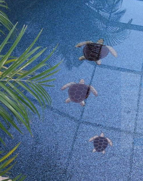 looking for pool mosaics check out