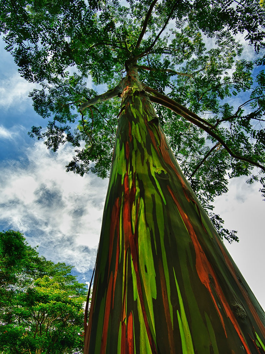 7530960-R3L8T8D-880-amazing-trees-19-1
