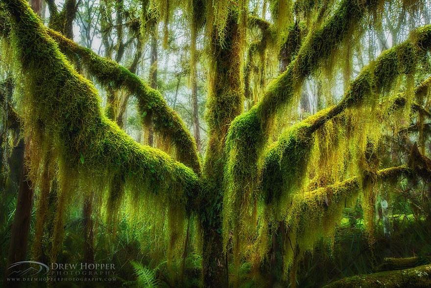 7530360-R3L8T8D-880-amazing-trees-23