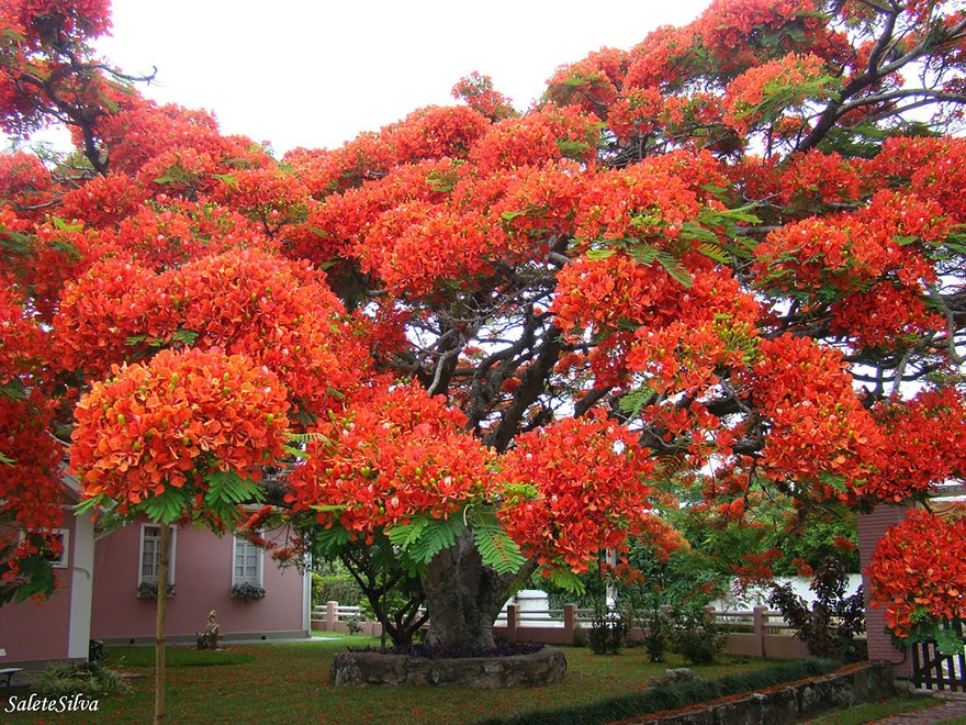 7530910-R3L8T8D-880-amazing-trees-15