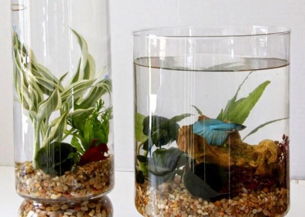 diy indoor water garden tilly's