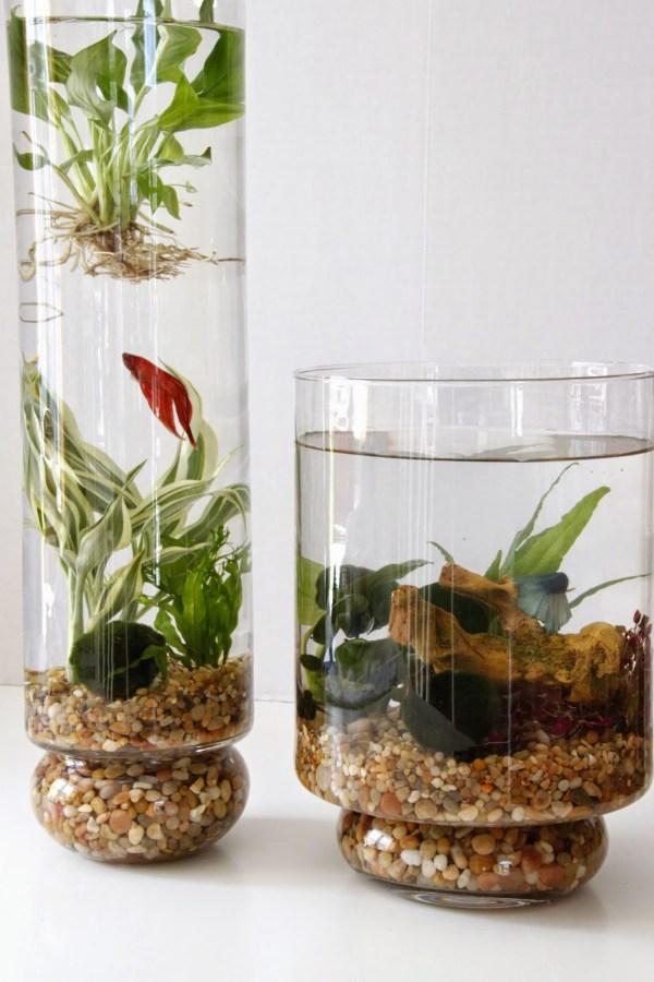 diy indoor water garden - tilly's