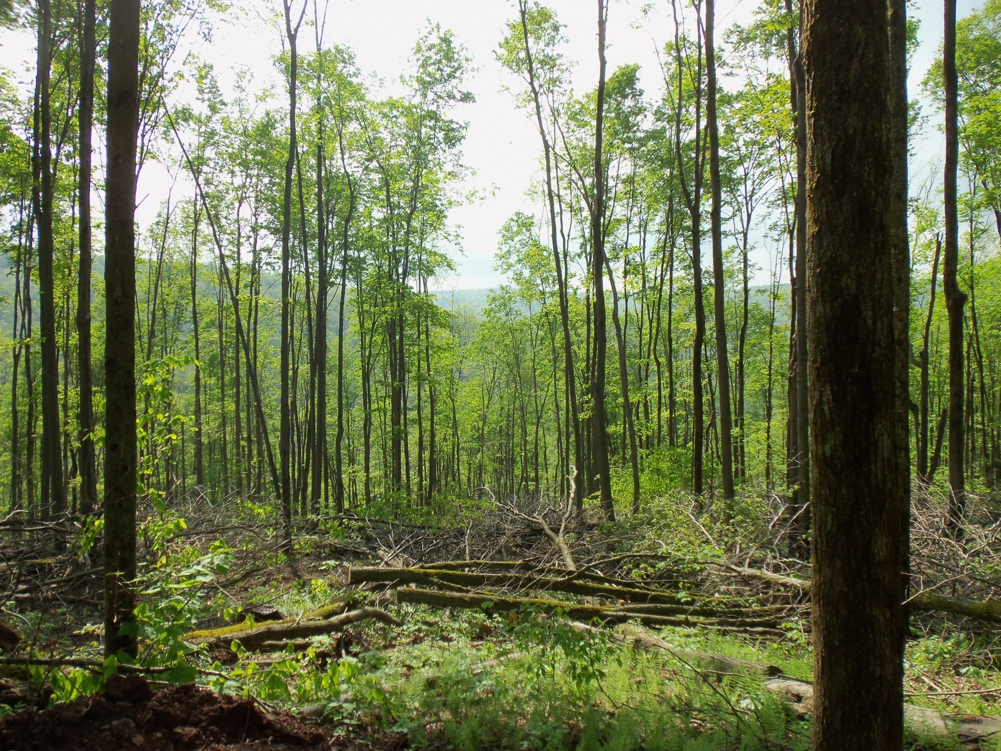 43 16 Acres With Woods In The Town Of Bolivar Timberland