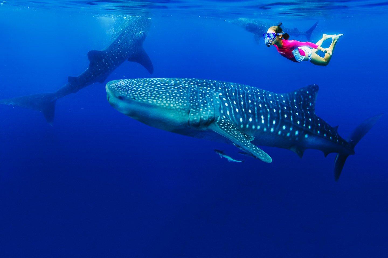 snorkelling-whale-shark-zanzibar-tanzania-timbuktu-travel east africa safaris