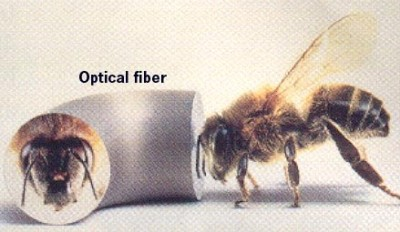 Optical fiber as a time machine