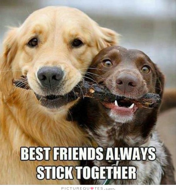 Best Friend Time Capsule - Dogs