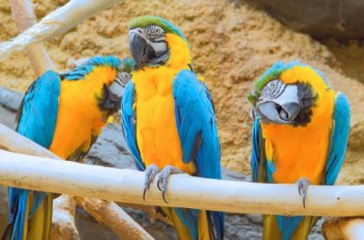 Foods You Should Never Give Your Parrot