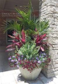25 Ideas of Outdoor Plants In Pots Ideas
