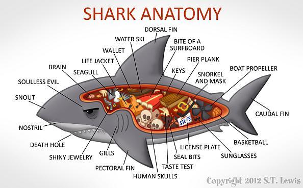 A Cartoon Guide To Shark Anatomy
