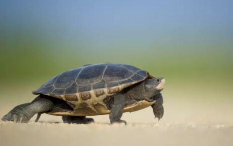 Scientises Control Turtle Using Use Parasitic Robots