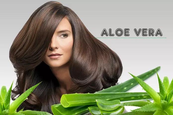 Aloe Vera for Hair Growth