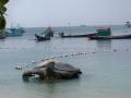 Koh Tao Thailand Tauchen