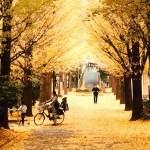 herfst in tokio