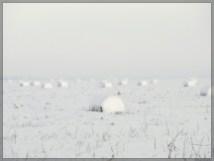 Lumepallid