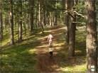 Nobedalt metsa poole