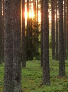 See mets varjab endas mustikaid ja mereranda... Tuhkana.