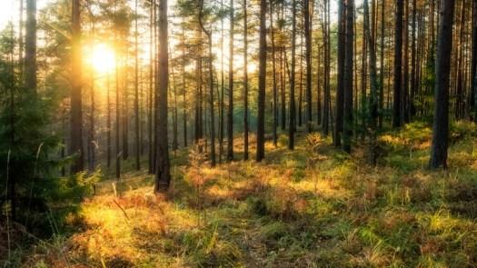 Mets õhtuvalguses