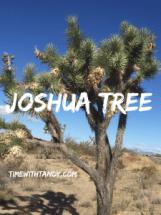 #inspiration, prayer, bible, God, Joshua tree