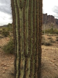 saguaro, cactus, pleats, inspiration