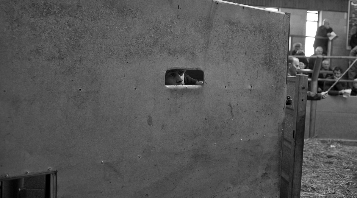 A herdsman peers through a small observation slit in the sheet metal ring door.