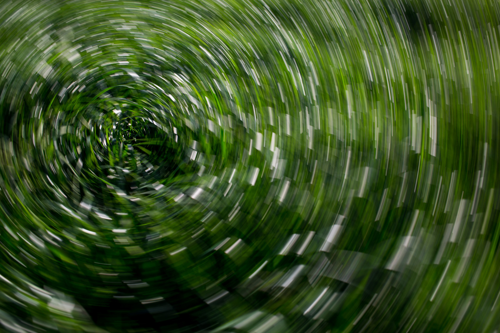 Grass is blurred into a circular pattern by spinning the camera as the photo is taken.