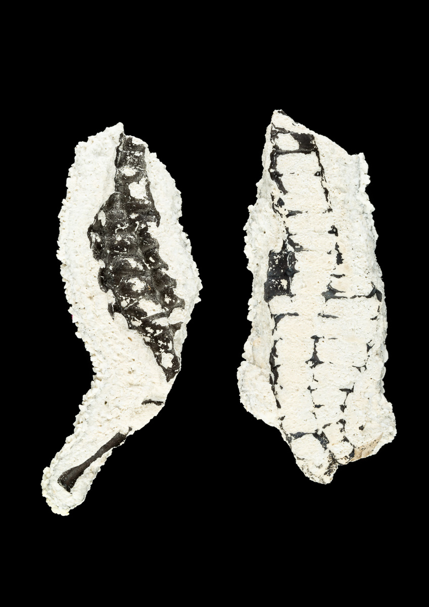 Two pieces of ceramic displaying traces of seahorse design.