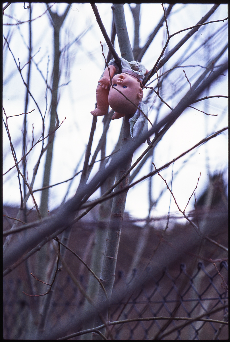Colour photo of a doll suspended on its back within the branches of a tree. The doll appears to be waving at us.