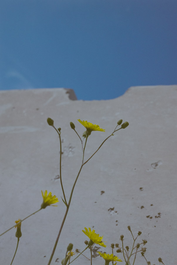 Tall, yellow-flowered weeds rise up in the foreground with a concrete barrier and blue sky visible behind.