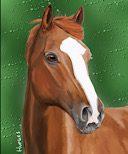 Pet portrait of Zazou the horse