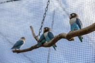Petits oiseaux rigolo