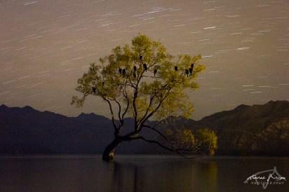 Wanaka by night