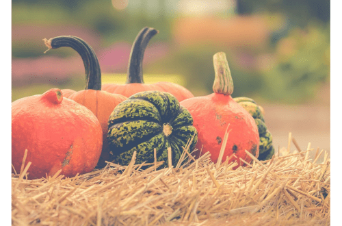 Pumpkin, the Amazingly Powerful Food You Need to Feed Your Horse and Dog Now
