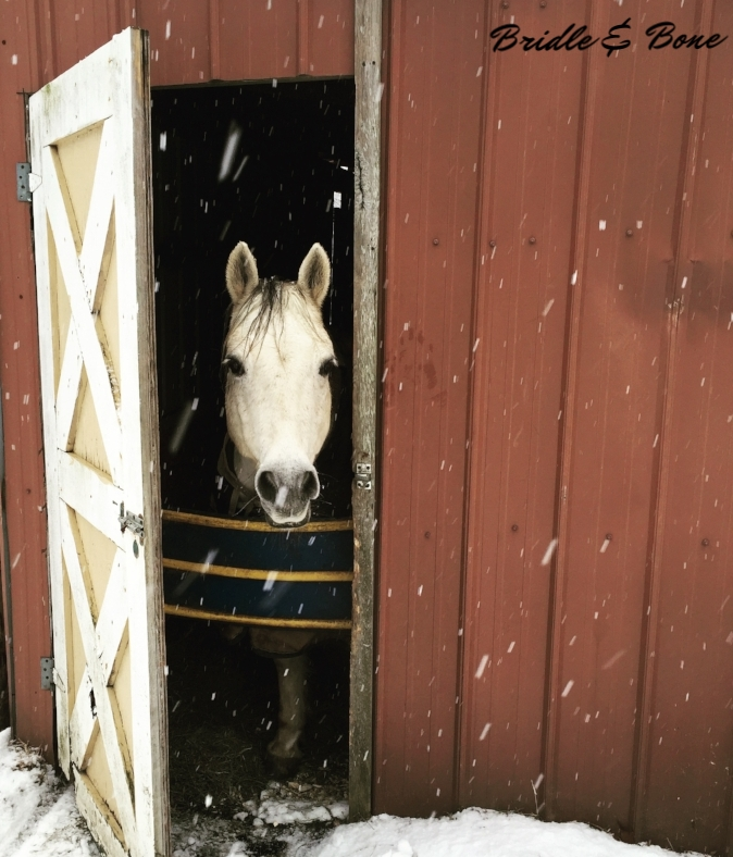 Winter Wonderland at Lancaster Equestrian Stables