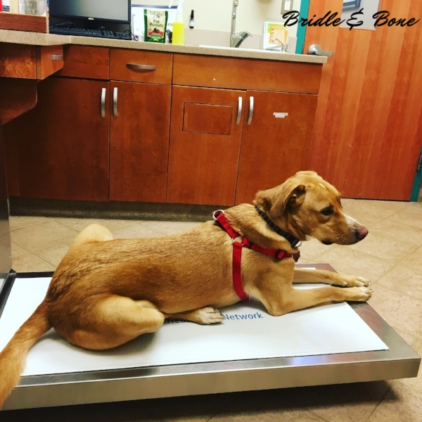 How I Trained My Dogs to Love the Veterinarian